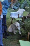 Já ty buřty nesněd! aneb těžký život psa u stánku s občerstvením