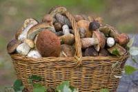 Nesbírejte houby...