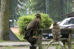 V sobotu se mohli návštěvníci zúčastnit různých soutěží, výtvarných dílen nebo se nechat vyfotit s dravými ptáky.