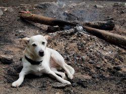 Nakonec byla poslední kytara uklizena až krátce před nedělním polednem. To už oheň jen doutnal a z něj se na vás díval hot dog.